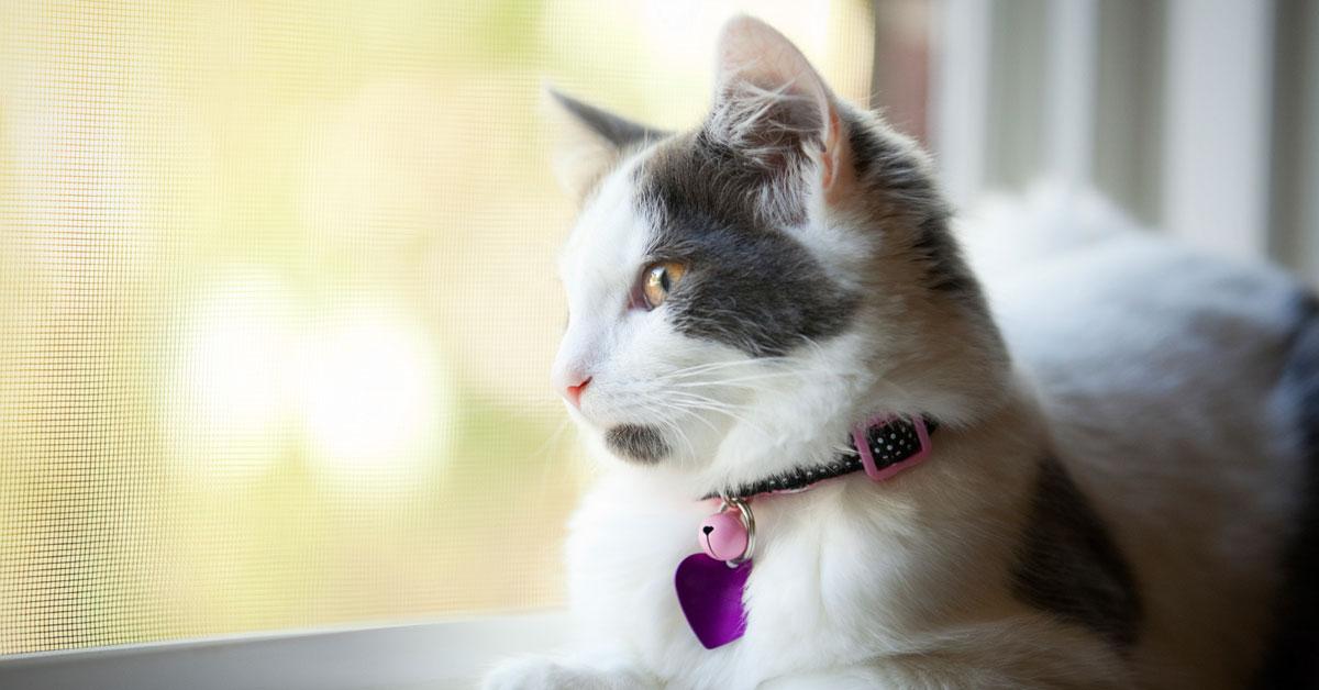 five-month-old-kitten-sitting-window